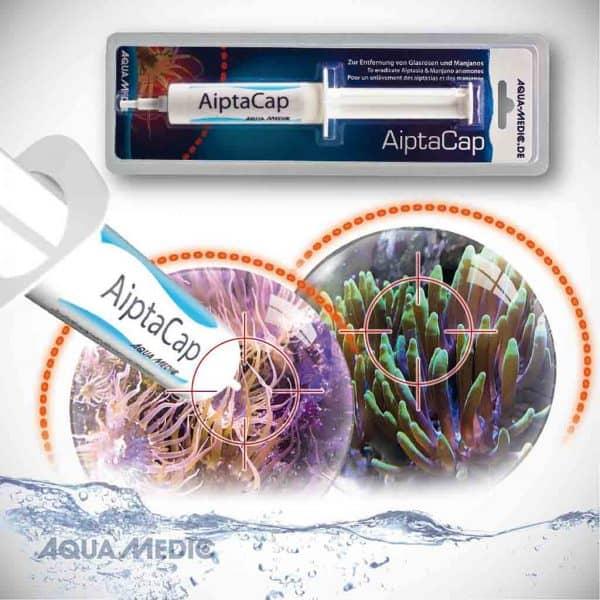 AiptaCap