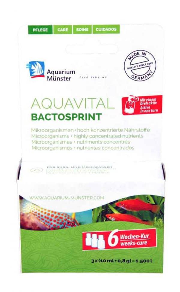 Aquarium Münster Aquavital Bactosprint 3x10 ml + 0.8 g 6-weeks cure